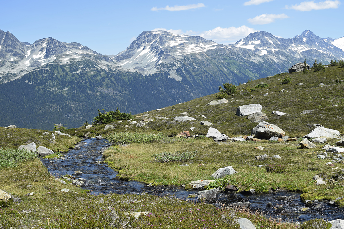 whistlerhike6web